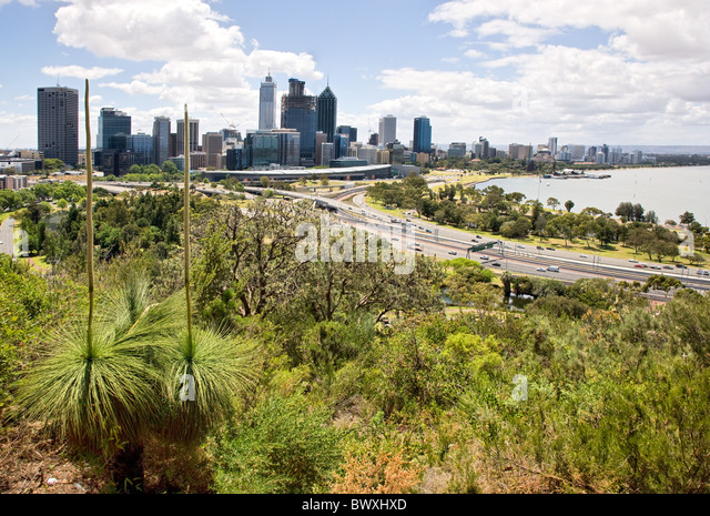 how to grow banksia ashbyi in melbourne