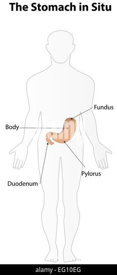 cardia stock photos  u0026 cardia stock images