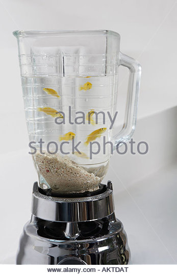 Blender stock photos blender stock images alamy for Fish in a blender
