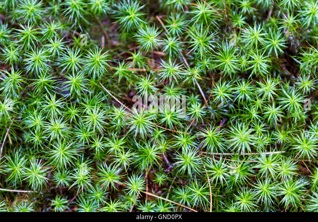 Plants with spiky leaves stock photos plants with spiky for Green floor plant