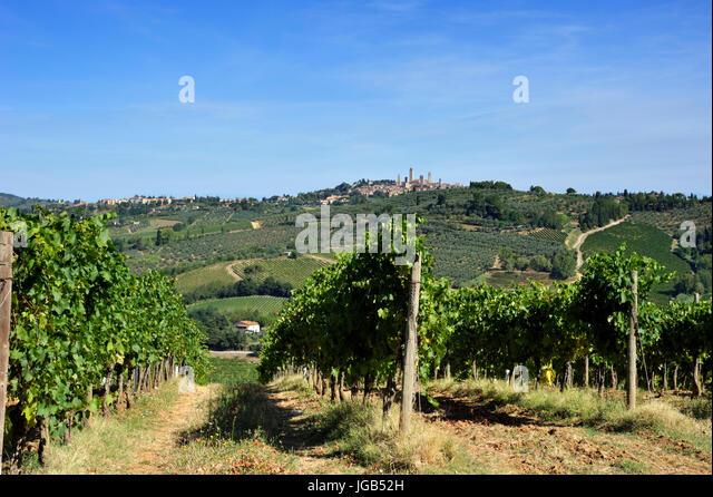 Vineyard Rows Vines In Tuscany Stock Photos & Vineyard Rows Vines In ...