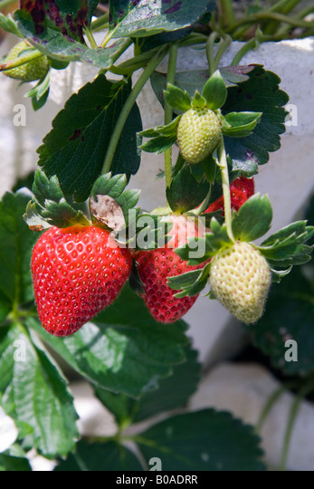 Hydroponic System Stock Photos Amp Hydroponic System Stock