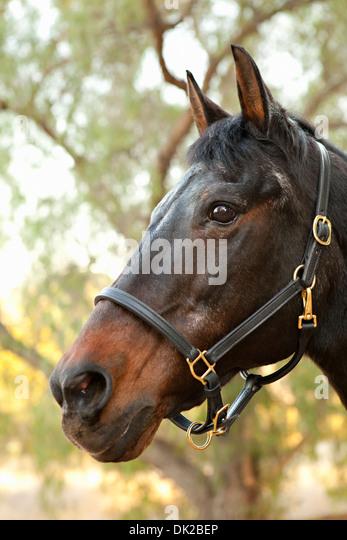 horse face close up stock photos amp horse face close up