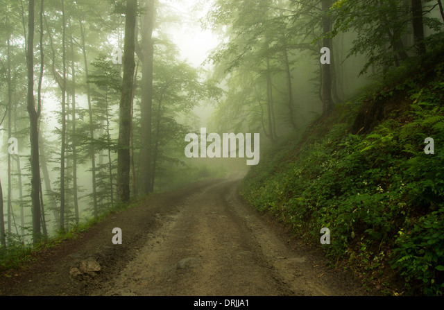 Misty Green Forest Nature River Beautiful 1ziw: Misty Green Forest Stock Photos & Misty Green Forest Stock