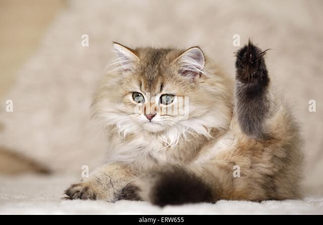 cat adoption orange county