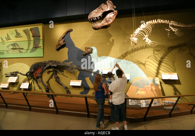 Family museum dinosaur stock photos family museum Dinosaur museum ohio