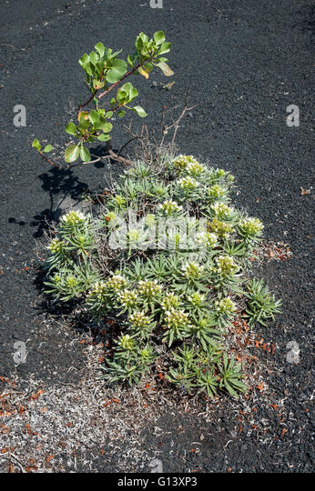 fertile soil volcano - photo #47