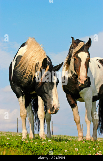 Coat pattern horse horses stock photos amp coat pattern horse horses
