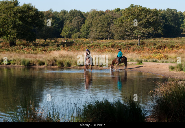 Horses Drinking Water Stock Photos Horses Drinking Water Stock Images Alamy