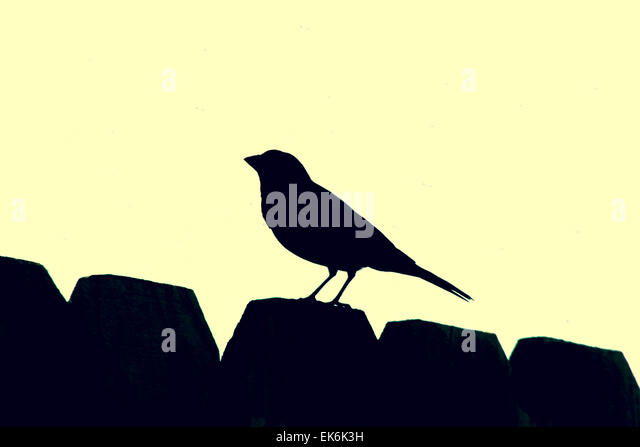 Wren Flying Stock Photos & Wren Flying Stock Images - Alamy