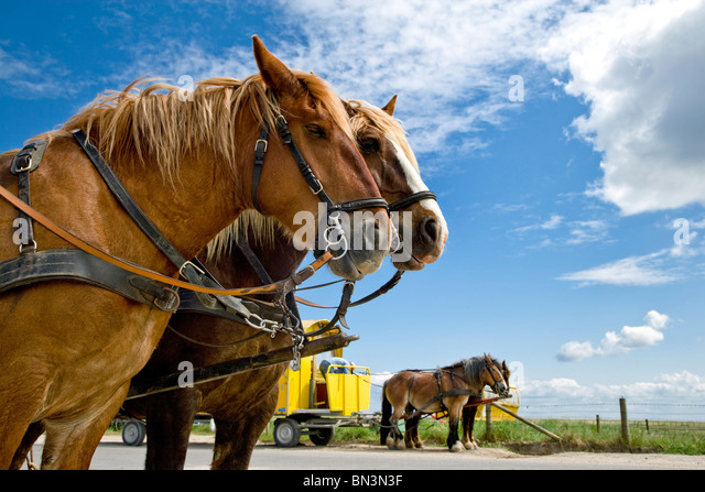 horsedrawn stock photos horsedrawn stock images alamy. Black Bedroom Furniture Sets. Home Design Ideas