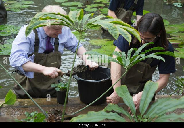 Waterlilies uk stock photos waterlilies uk stock images for Garden pond waders