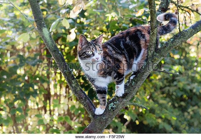 Cat Climbing Domestic ...