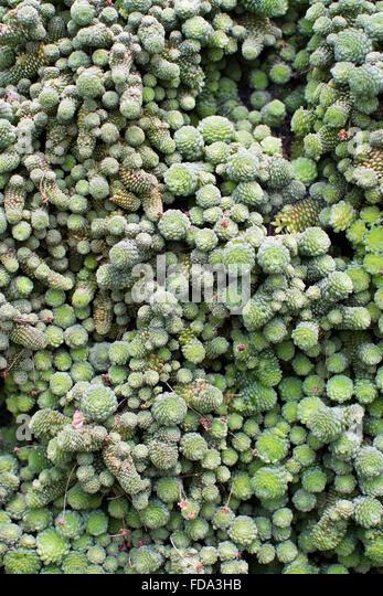 small succulent frames succulent shrub stock photos succulent shrub stock images alamy