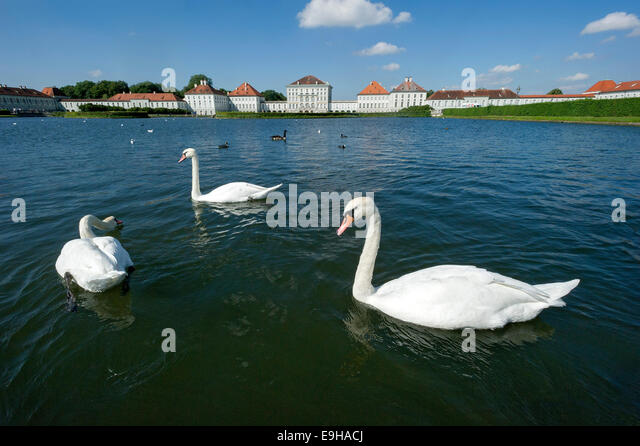 East Side München mute swans stock photos mute swans stock images alamy