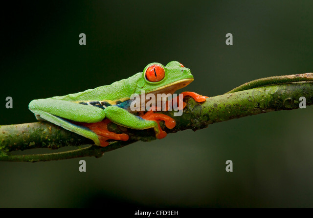 Frog Stock Photos Amp Frog Stock Images Alamy
