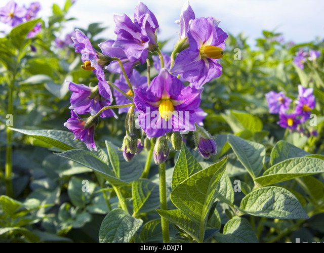 Nutration Stock Photos & Nutration Stock Images - Alamy