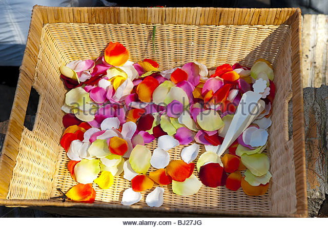 Multi colors stock photos multi colors stock images alamy for Multi colored rose petals