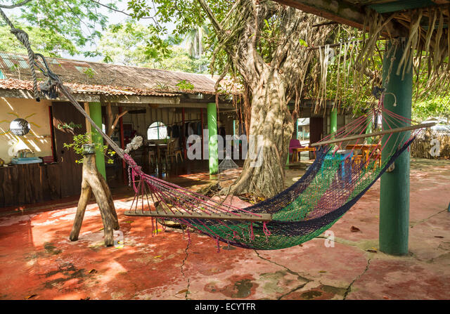 Medium image of a juice bar with a hammock in quiet playa garza nosara costa rica   stock