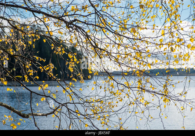 Autumn leaf with lake and landscape background at autumn day - Stock Image
