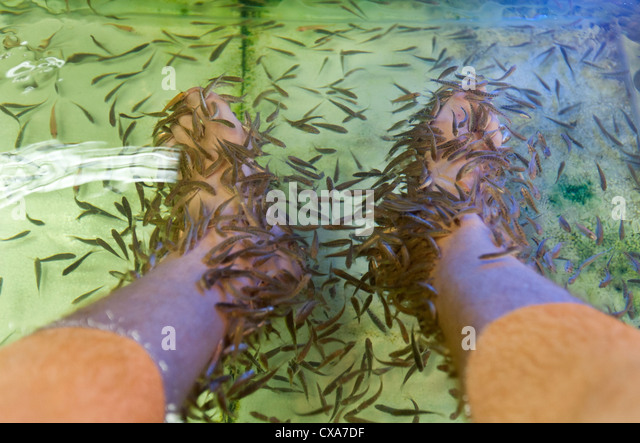 Garra rufa stock photos garra rufa stock images alamy for Fish pedicures near me