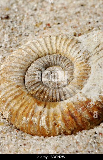 The Mollusks Type Stock Photos & The Mollusks Type Stock ... L Mollusks