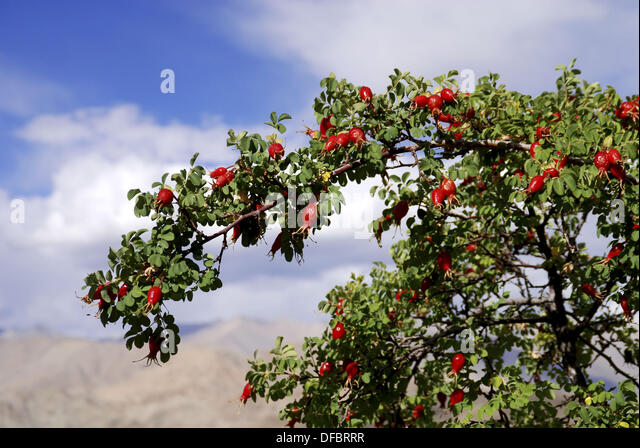 thorny tree stock photos amp thorny tree stock images alamy