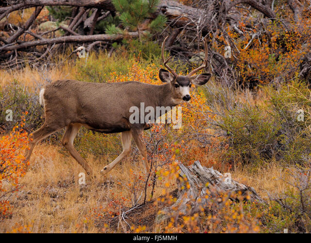 Black harts stock photos black harts stock images alamy for Deer scenery