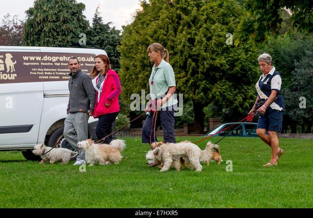 Nathan Watson Dog Walk