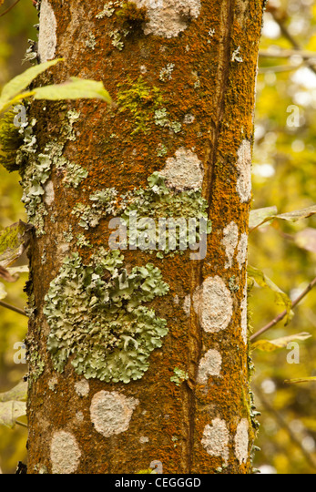 Lichen covered tree trunk stock photos lichen covered for What is a tree trunk covered with 4 letters