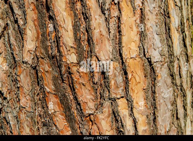 Cracking Texture Stock Photos Amp Cracking Texture Stock