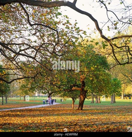 Engledield Green Dog Walking Park