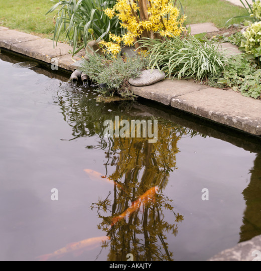 Orfe stock photos orfe stock images alamy for Golden ornamental pond fish