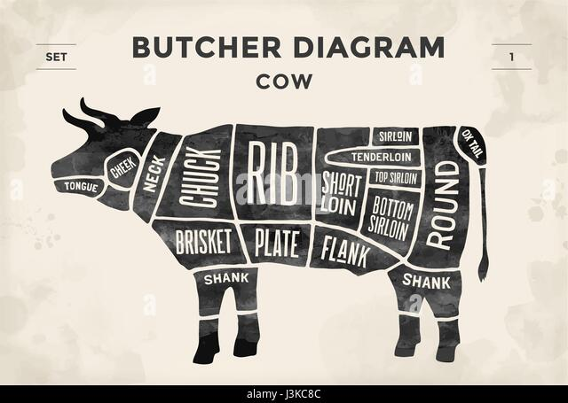 Diagram Of Cow Stock Photos & Diagram Of Cow Stock Images - Alamy