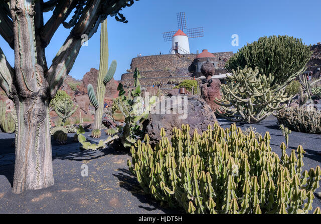 jardin de cactus guatiza lanzarote canary islands spain stock image