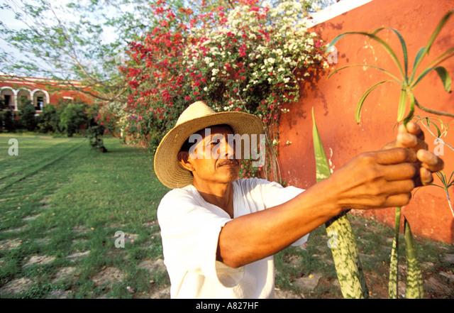 mexico yucatan state near merida luxurious hacienda temozon the gardener