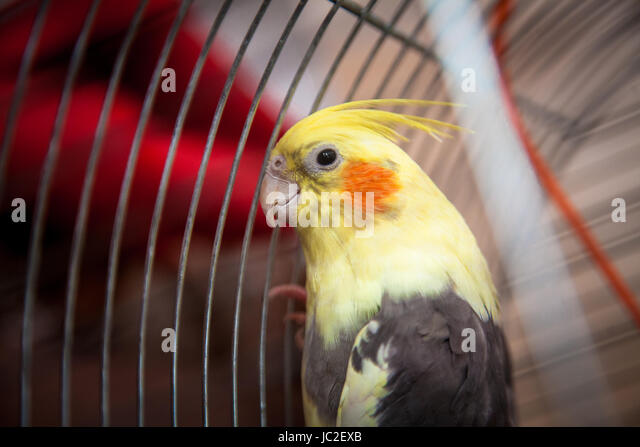 Are Cockatiel sitting at bottom of cage