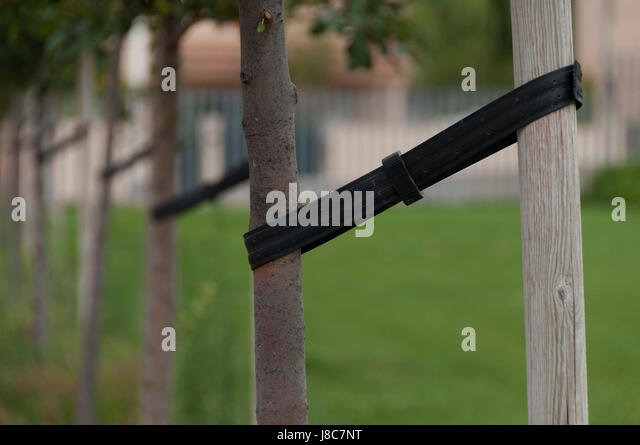Tree Staking Stock Photos Amp Tree Staking Stock Images Alamy