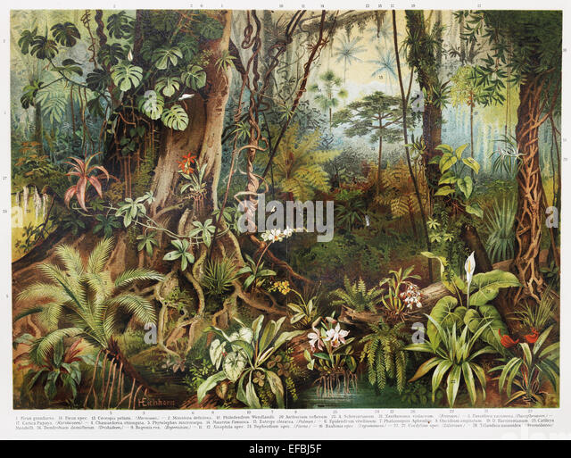 Forest Tropical Illustration Stock Photos & Forest ...