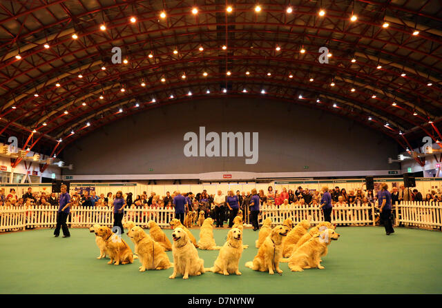 Southern golden retriever club uk