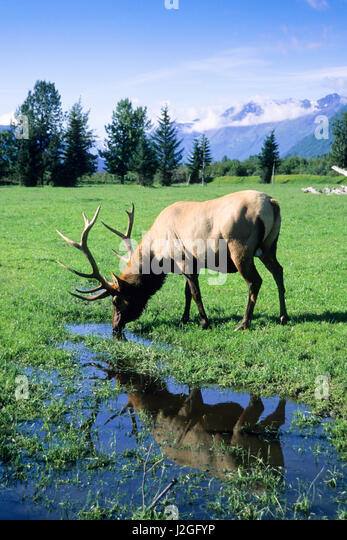 Athapascan Stock Photos Amp Athapascan Stock Images Alamy