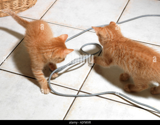 how to stop a kitten from biting wires