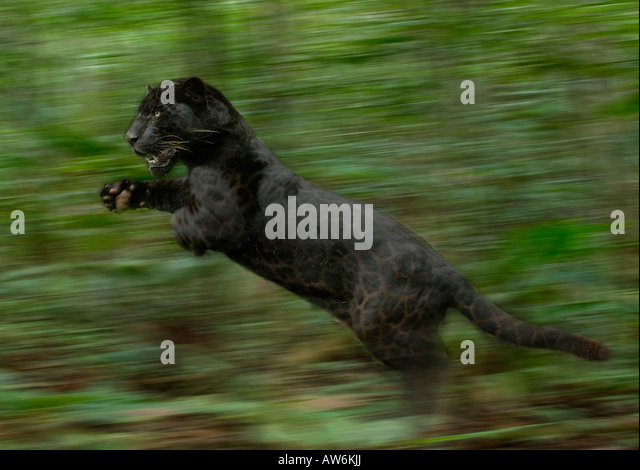wild animals pictures for kids