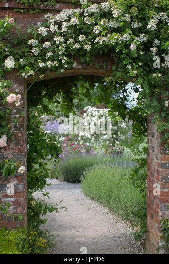 English Rose Garden In Summer   Stock Image