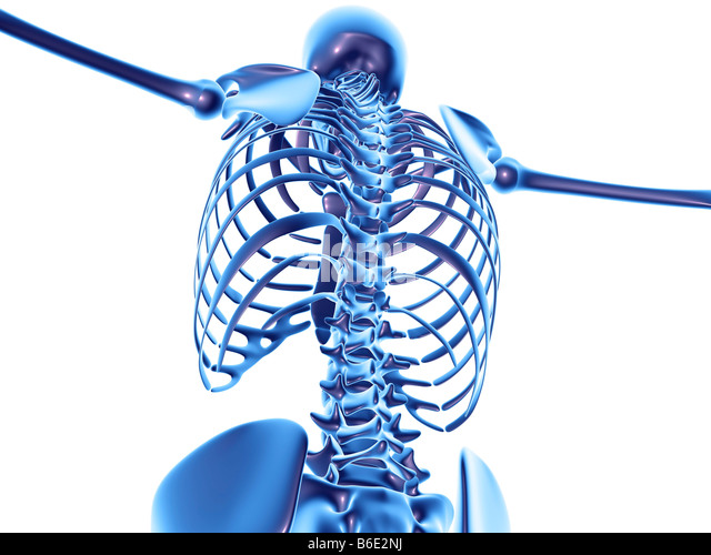 graphics skeleton stock photos & graphics skeleton stock images, Skeleton