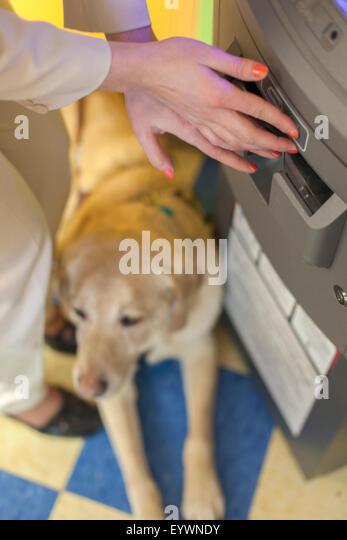 Blind Dog Training School