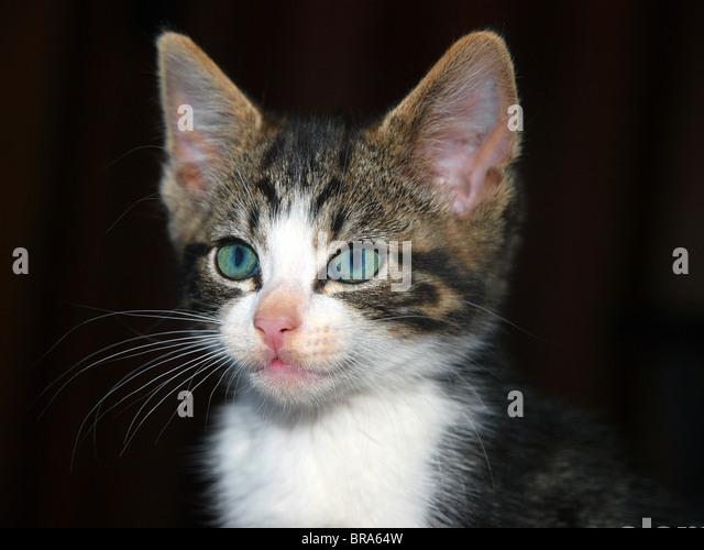 black cat green eyes stock photos amp black cat green eyes