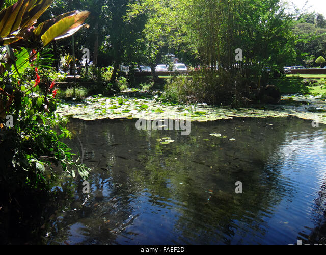 Papeete tahiti french polynesia stock photos papeete for Ornamental pond fish port allen