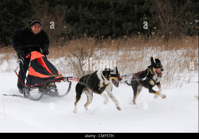 Mushing Dogs Stock Photos & Mushing Dogs Stock Images - Alamy