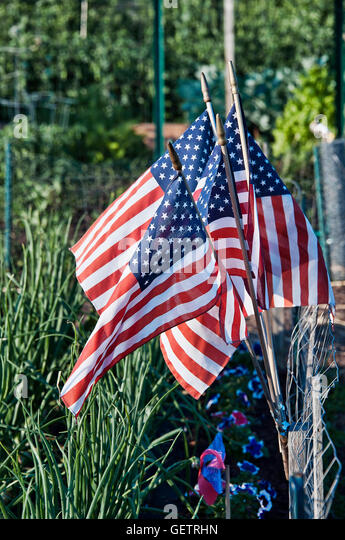 american flags in a community garden stock image